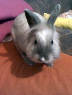 Bunnies-urinary-trackt-infection