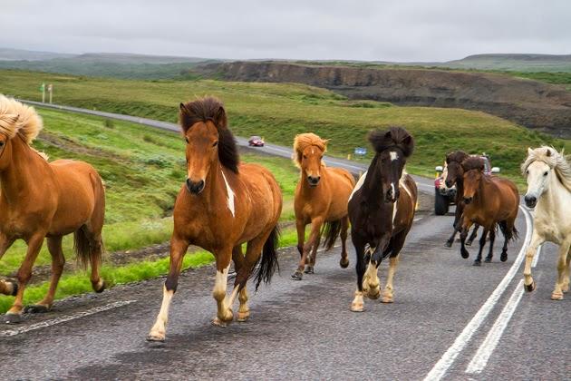 Horses of Island