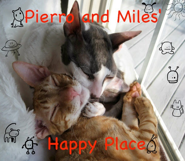 Pierro + Miles' Happy Place