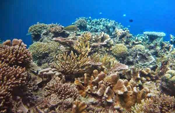 Sifat fisik dan kimiawi laut Indonesia