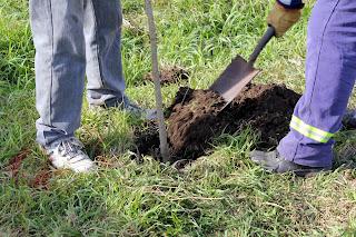 Comenzó la plantación de árboles en Barrio José Hernández