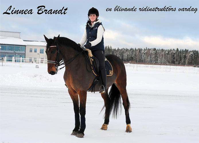 Linnea Brandt - en blivande ridinstruktrs vardag