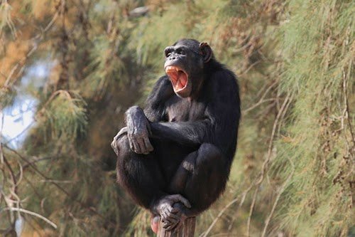 Funny Yawning Animals Photo Collection
