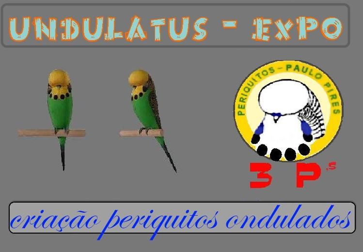 undulatus-expo