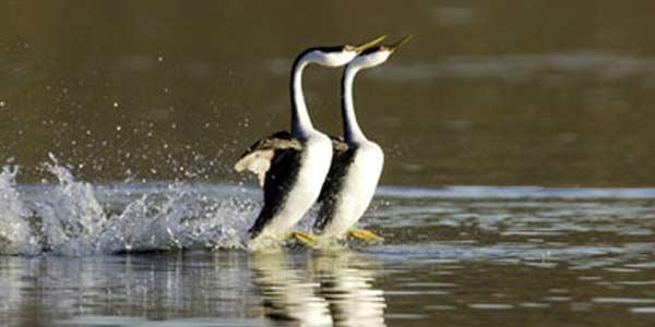 Cara Hewan Berjalan Di Atas Air [ www.BlogApaAja.com ]