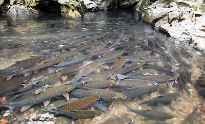Khám phá suối cá thần ở Cẩm Lương - Cẩm Thủy - Thanh Hóa