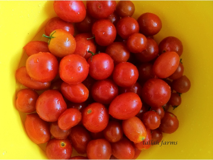 Tallah Farms How To Freeze Tomatoes