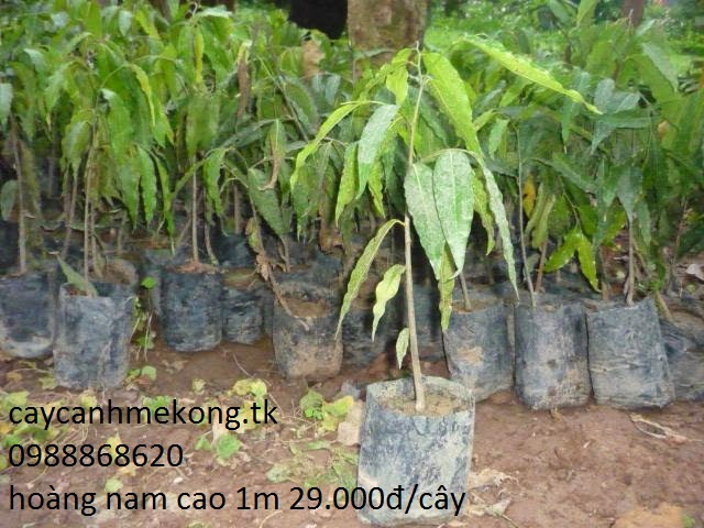 Cây Công Trình