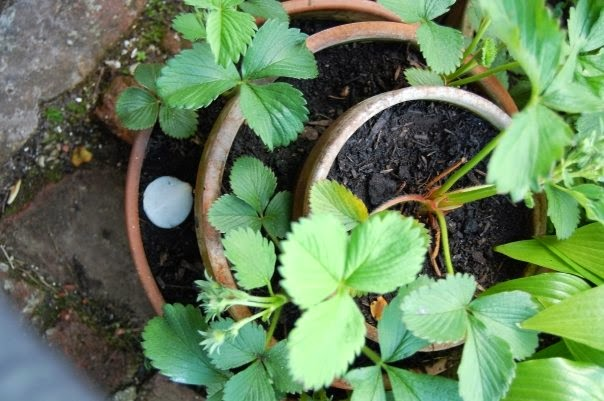 Pots anywhere in the garden can create a harvest #thinkspace #growing