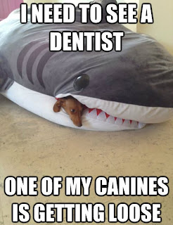 I need to see a dentist. One of my canines is getting loose.