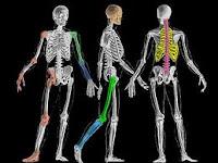 Pentingnya Kesehatan Tulang