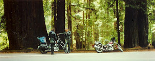 Harley Chopper and Giant Redwood Trees