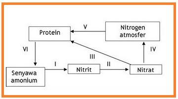 Soal pemanasan un 2011 d berimanberilmuberakal 11 perhatikan skema daur nitrogen di bawah ini ccuart Images