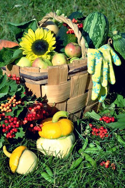 Осенний урожай.