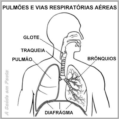Pulmões e vias respiratórias aéreas. Localização do diafrágma, responsável pelos soluços.