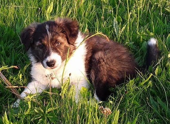 Glade Gimli, Bent's nye hundehvalp