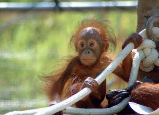 Monkey funny cute - photo#13