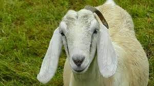 berbagai usaha rumahan ternak hewan