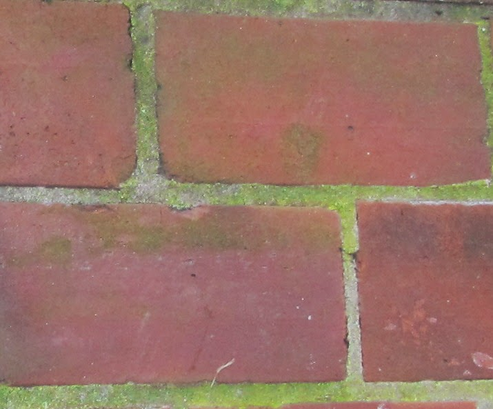 Views From The Garden How To Clean And Control Mold And Mildew On Exterior Bricks