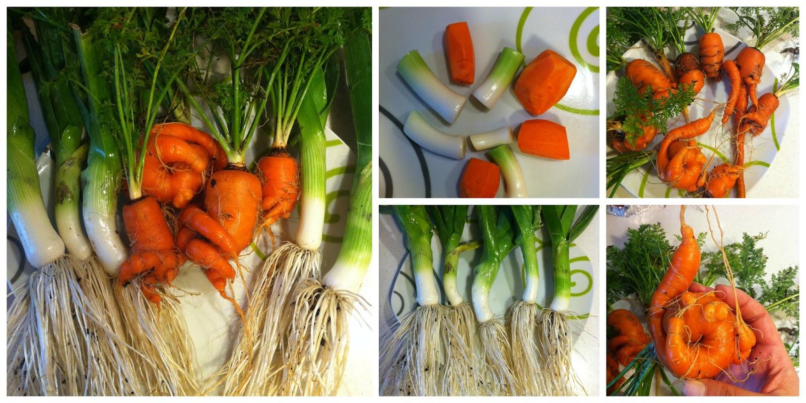 Bachi 4 chica zanahoria