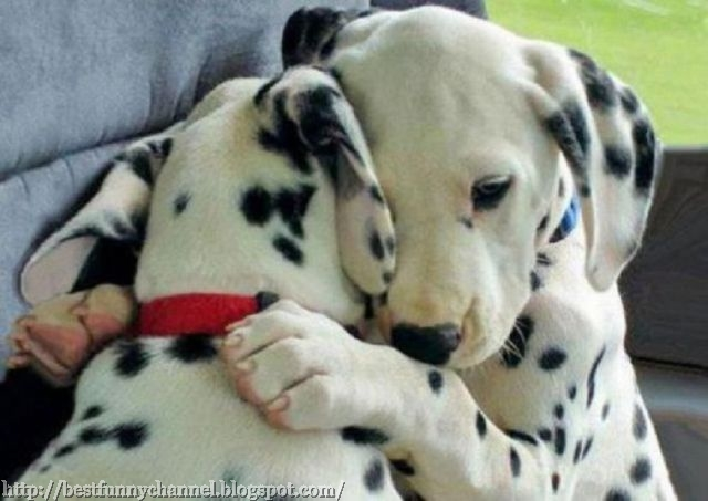 Cute puppy.