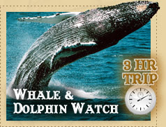 Take a three-hour Dolphin and Whale Watching Trip!