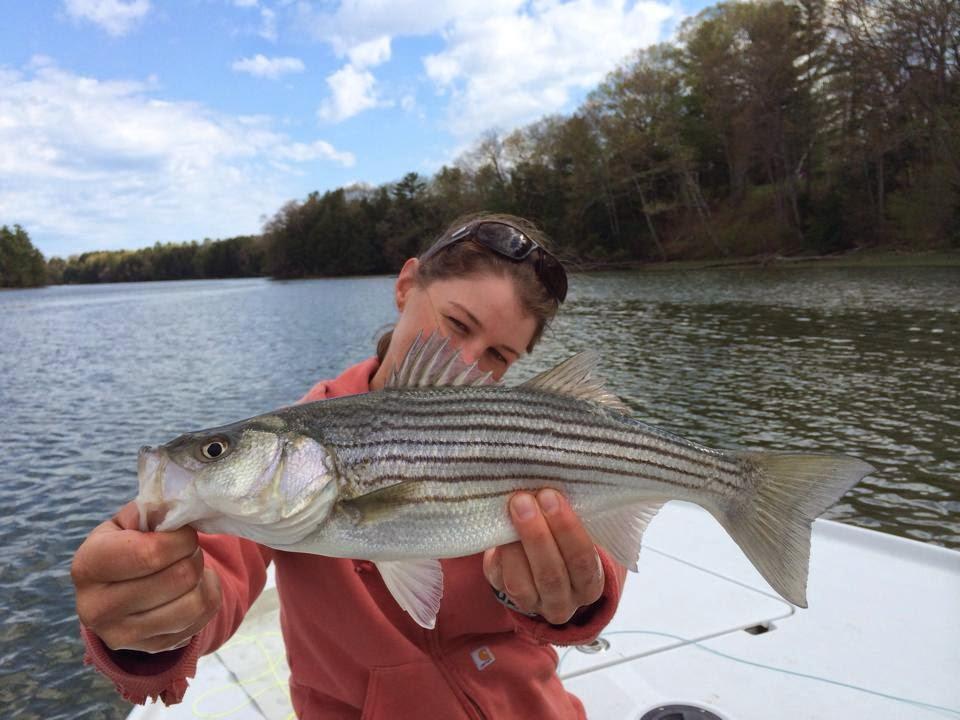 Maine striper fishing reports maine striper fishing 2014 for Striper fishing report