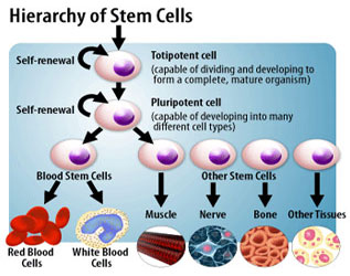 types of stem cell