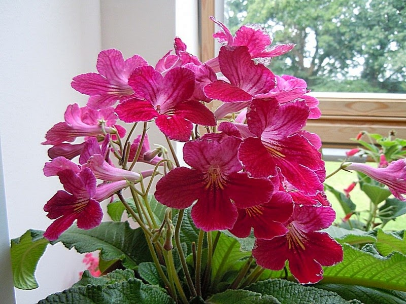 10 Beautiful Houseplants for 2015