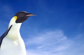 Why a penguin? It will make sense in a minute