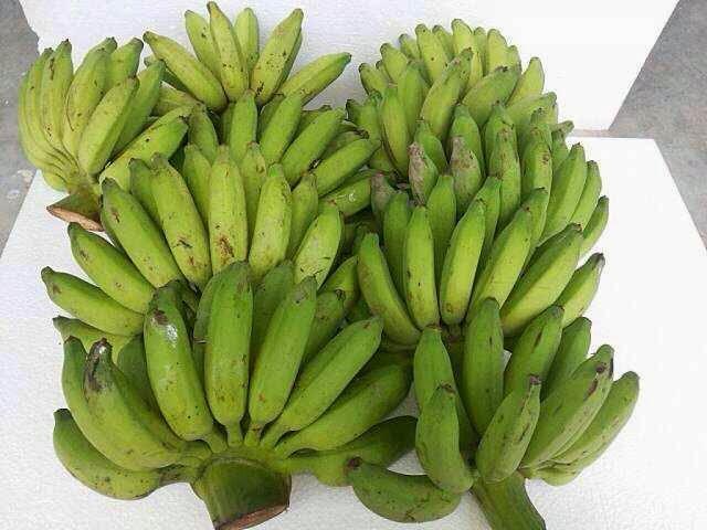 กล้วยน้ำไท