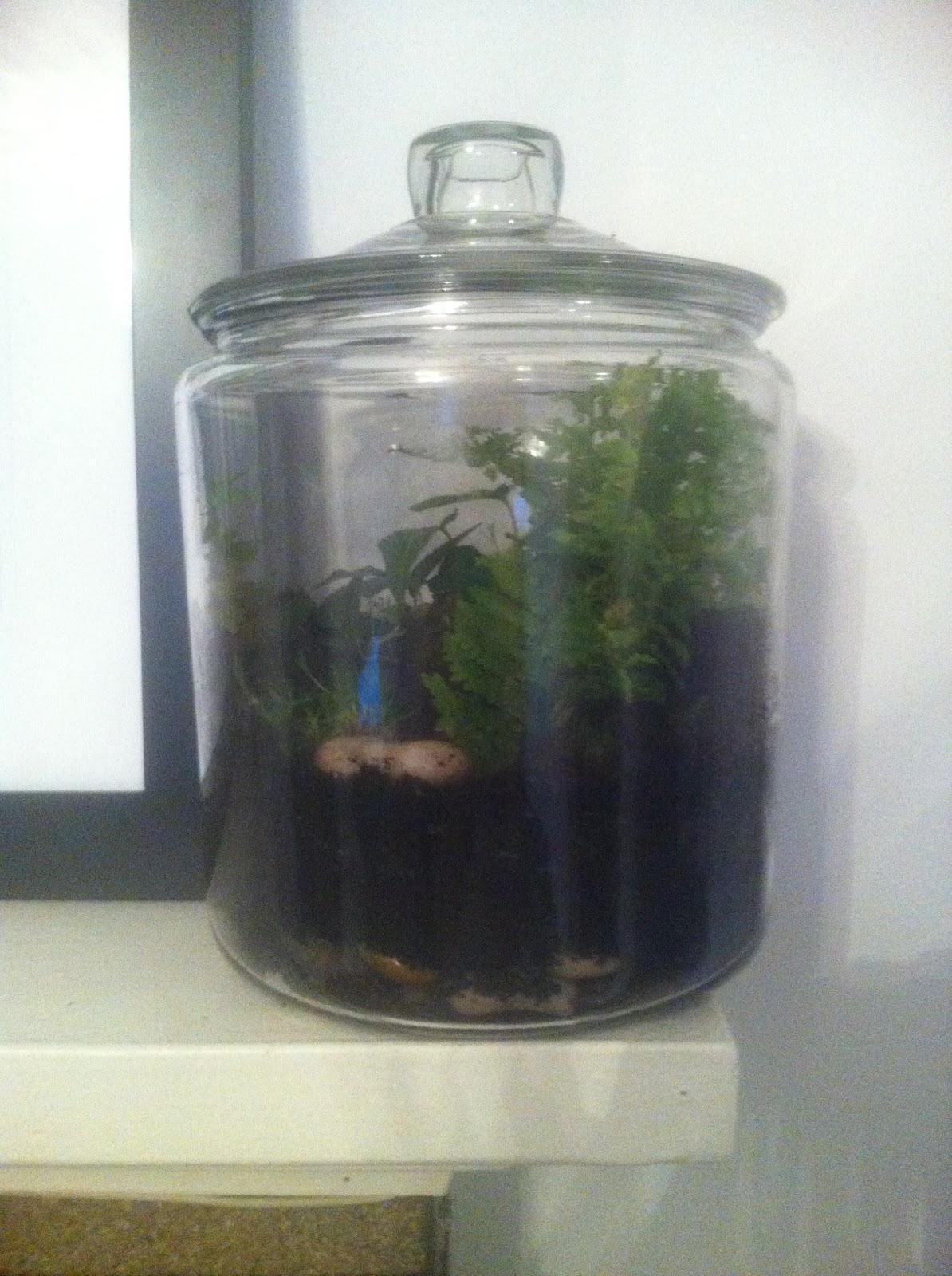 Create For Life Cookie Jar Terrarium