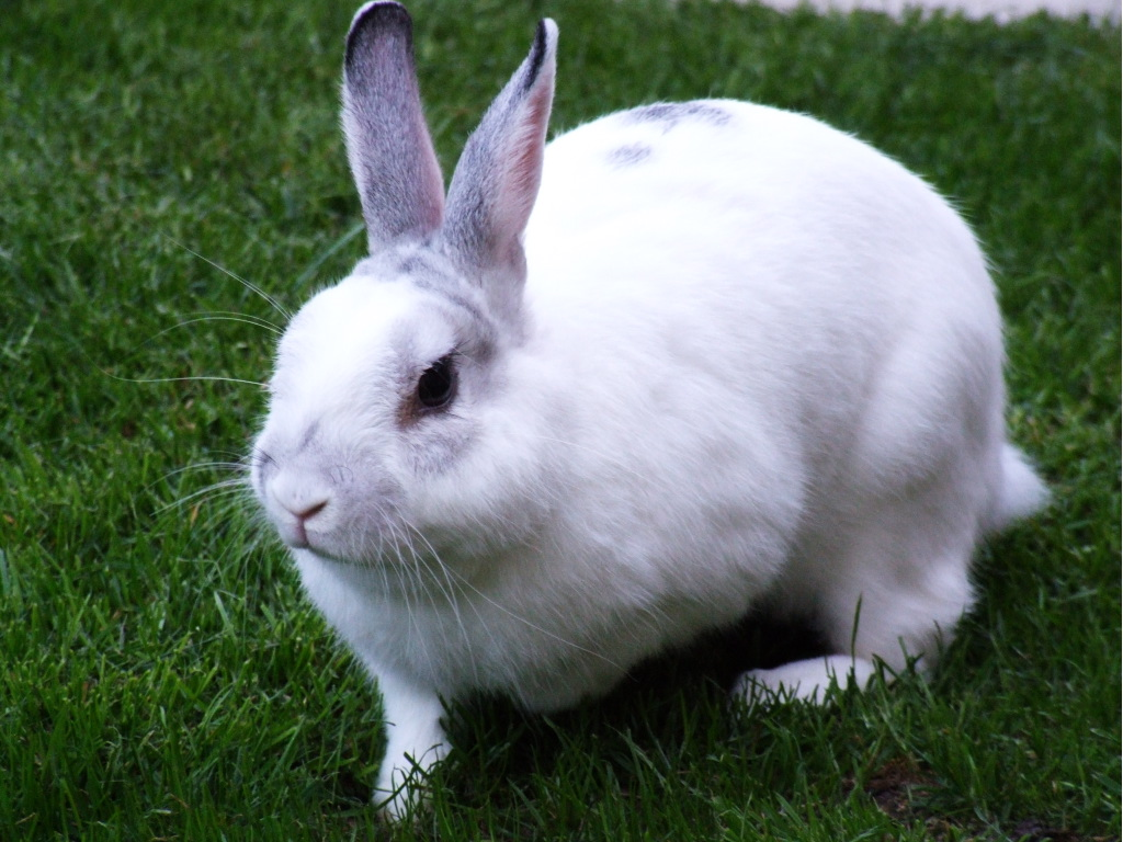 Rabbit  Lovely and Cute Animal  Animals Lover