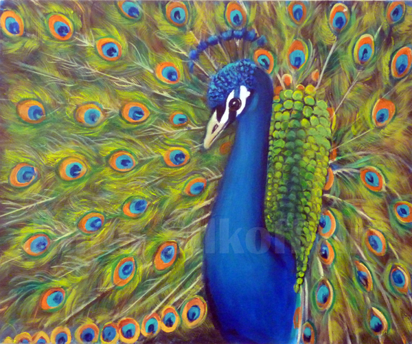The Proud Peacock