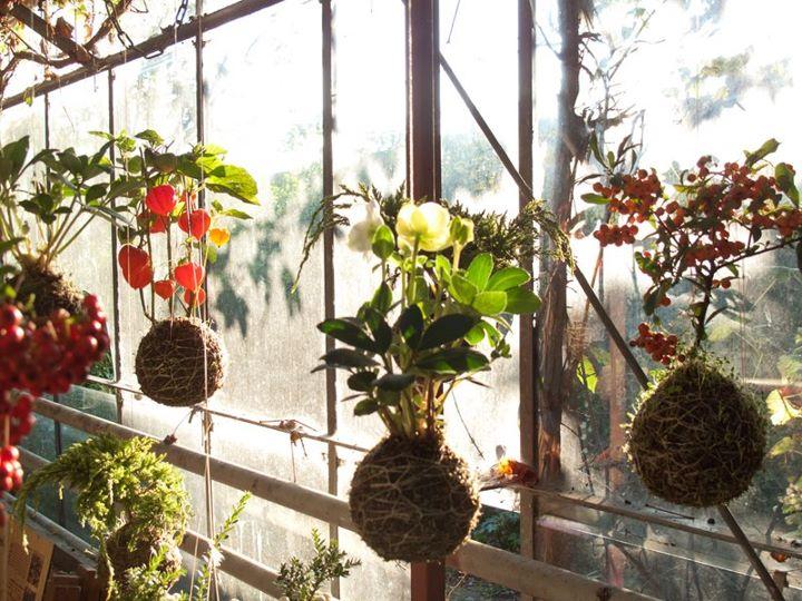 A r t c o h o l i c s string gardens plantas colgantes en amsterdam - Plantas colgantes ...