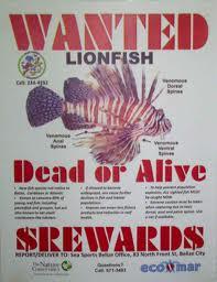 order lion fish online
