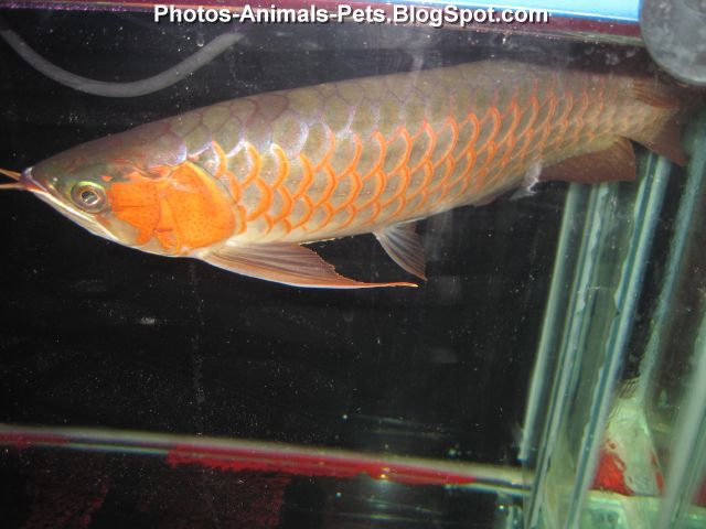 photo nice fish