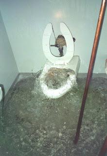 Sewer Backups 101 (part 1)
