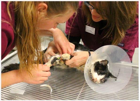 Porfin demostrado que los gatos tienen 7 vidas salio de la tumba
