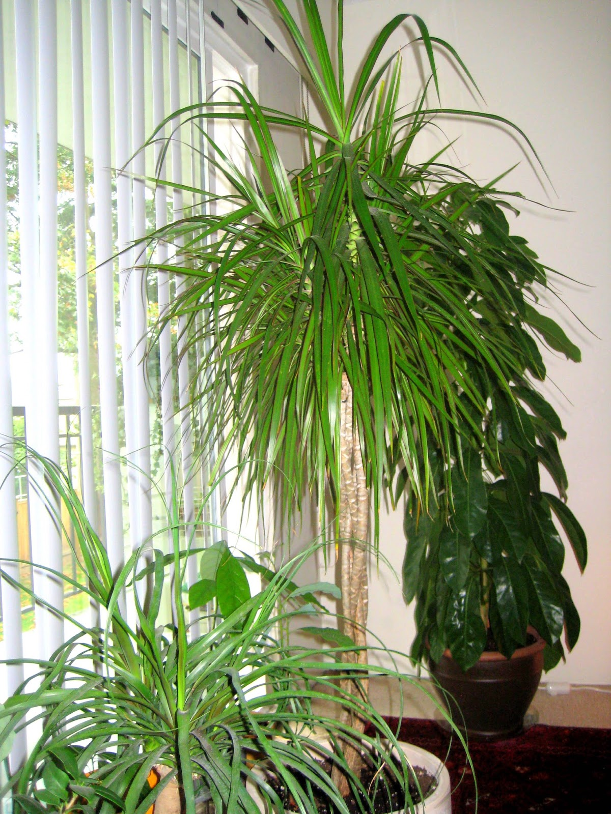 Humidifier for House Plants ~ My GARDENING #446F1A