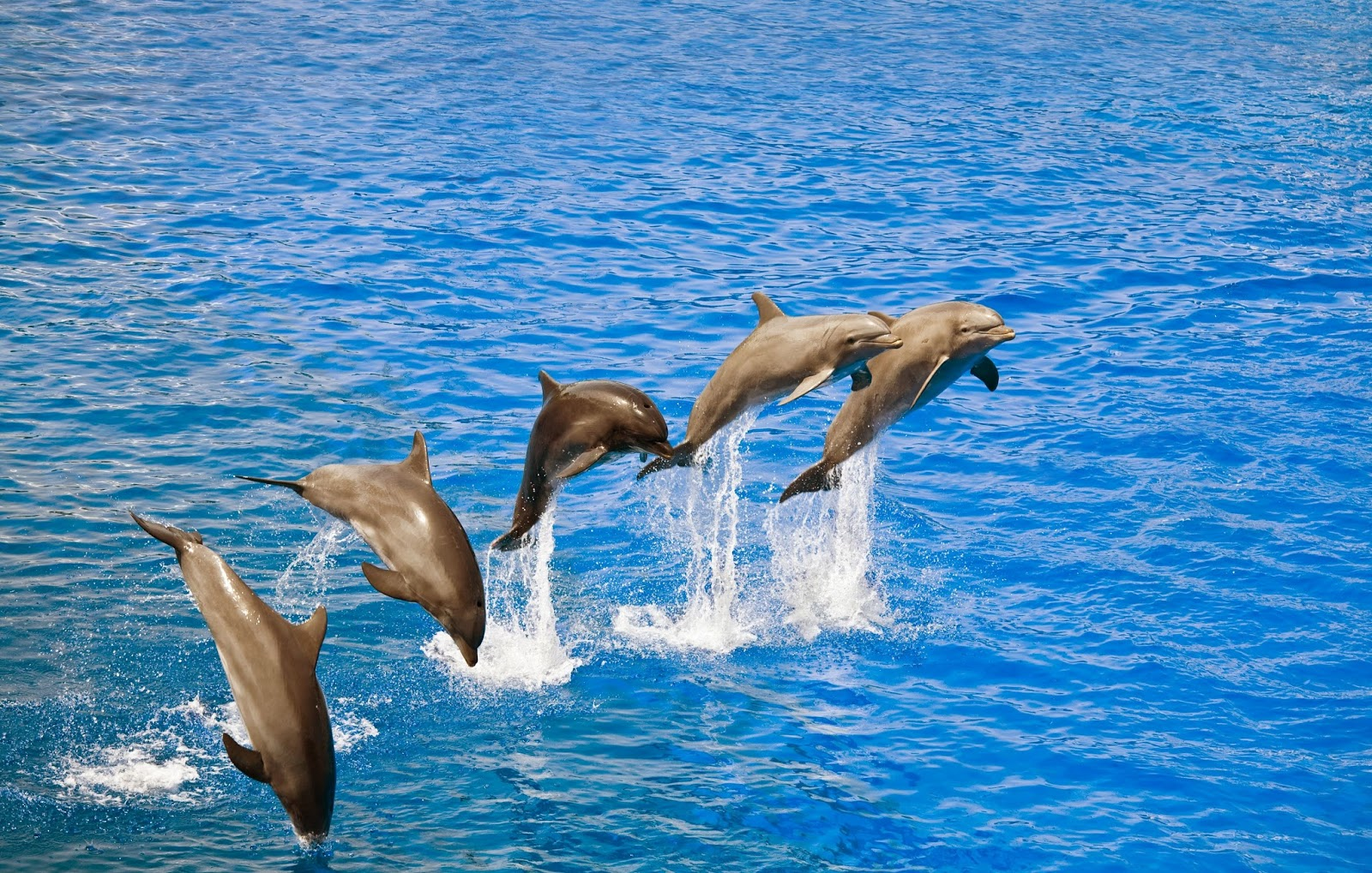 Baby dolphins jumping out of the water