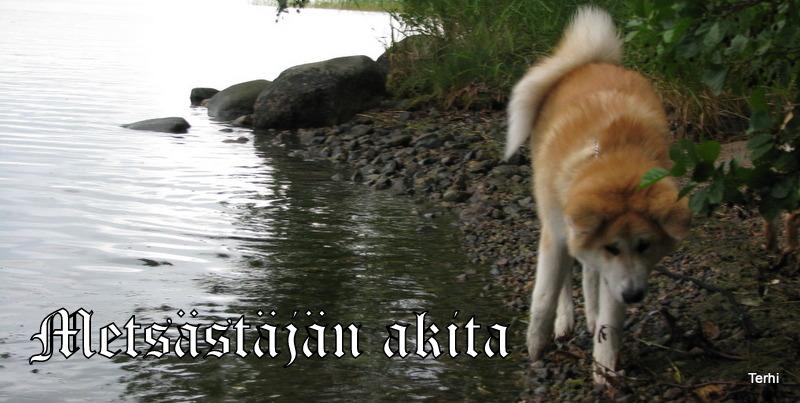 Metsästäjän akita