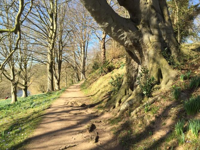 Main path at The Weir