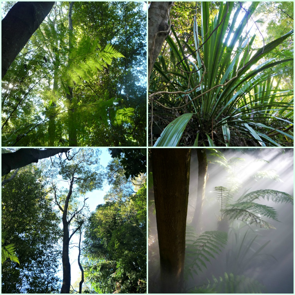 Plants In The Tropical Rainforest Collage a taste of the Austral...
