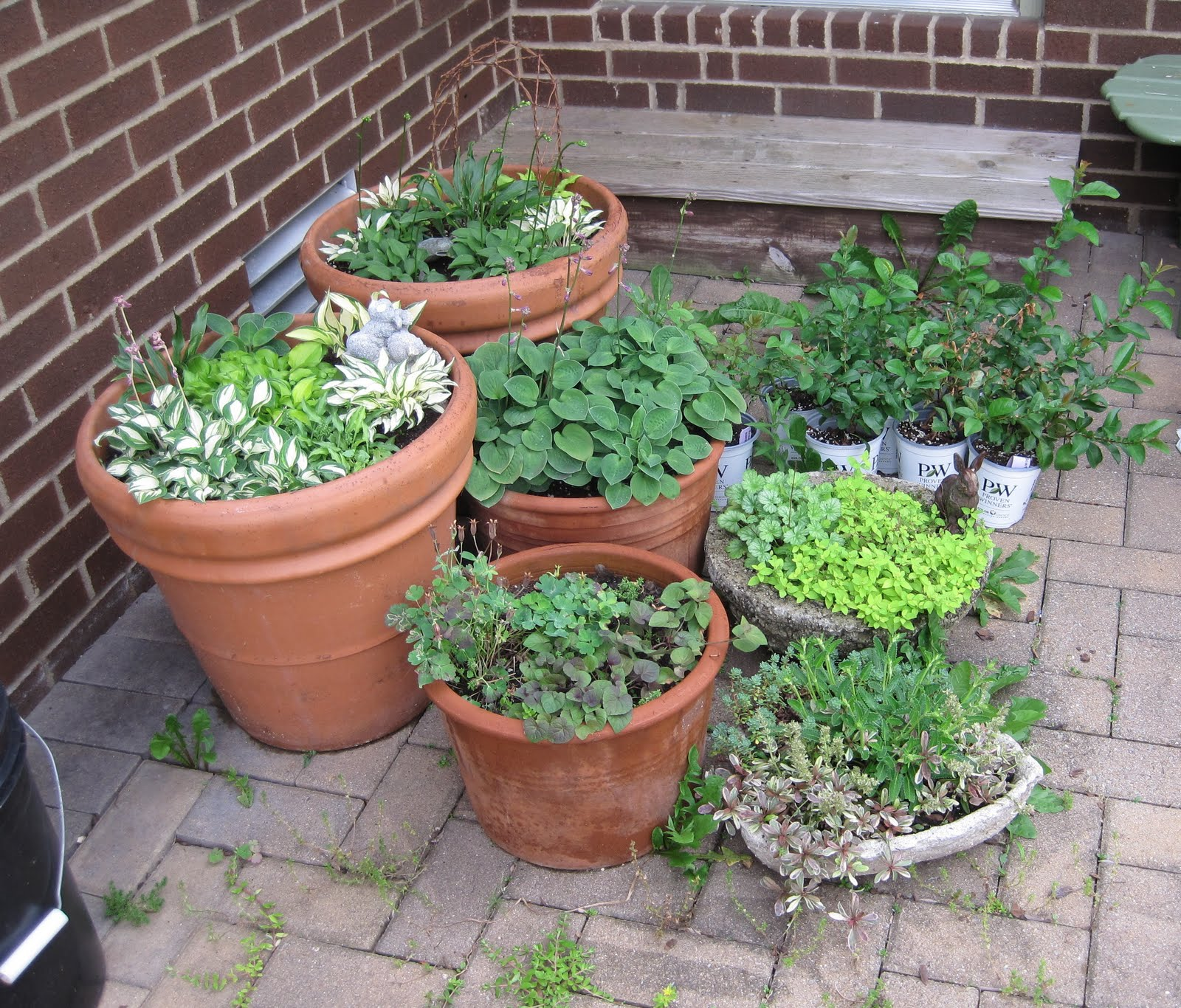 apartment patio garden ideas photograph