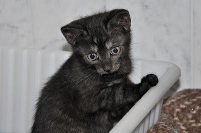 sehr überraschte junge Katze