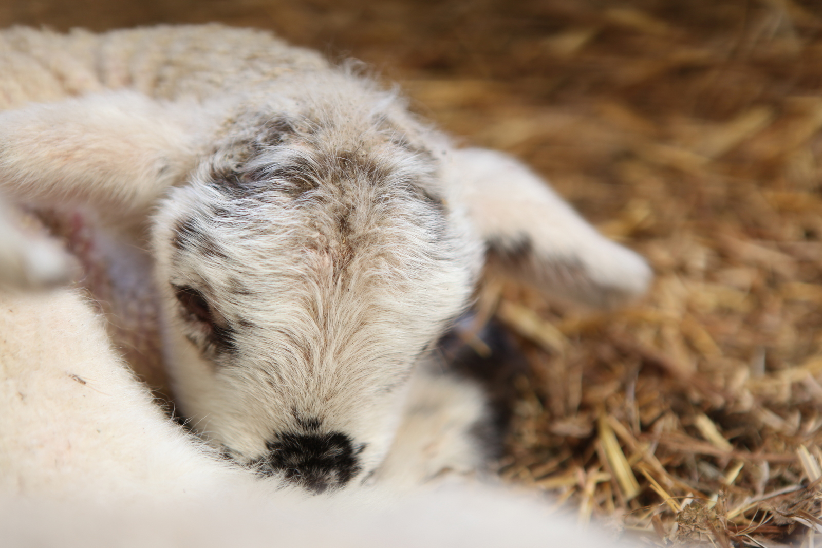 Yes and Amen Blog: March 2012 for Happy Baby Lamb  150ifm