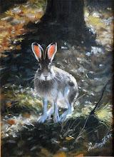 Hare i skog