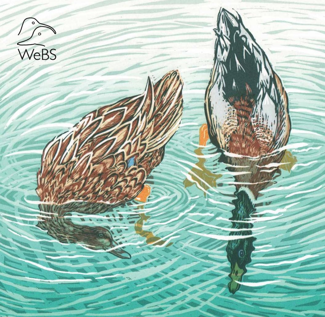 The Wetland Bird Survey (WeBS)