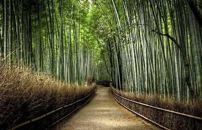 Jalan Bambu